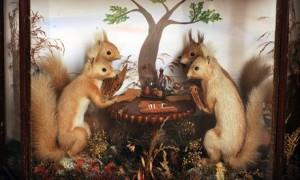 Hot-stuff-...-squirrels-p-007